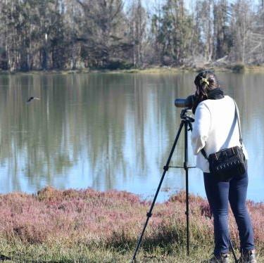 Monitoreo de aves